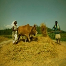 South Indian agriculture
