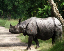 Wildlife Sanctuaries and Monsoon in Assam