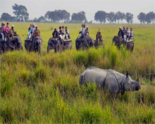 National Parks in Assam