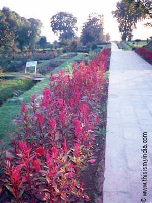 Garden at Kashmir,Valley of Flowers