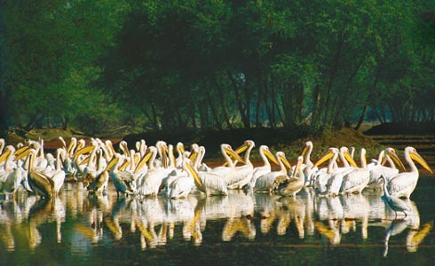 Wildlife India, Wildlife sanctuary, National parks in India