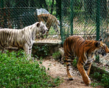 Bannerghatta Biological Park