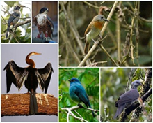 Fauna of Kerala