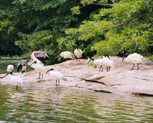 Thattekad Bird Sanctuary of Kerala