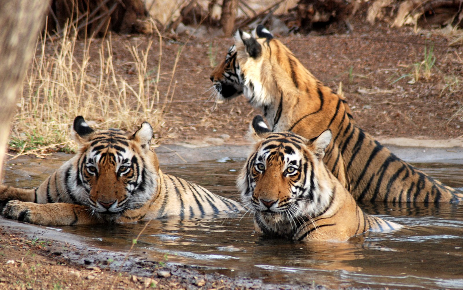 Sunderbans National Park & Tiger Reserve